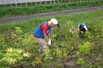 植樹した苗の成長を願い、雑草の刈り取り作業を行った。