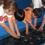 回胴遊商九州・沖縄支部、恒例のサンゴ保全活動