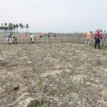 日遊協、仙台でクロマツの補植作業実施