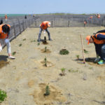 防災林の再生へ、日遊協が4回目の植林