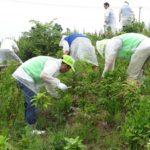 全商協が草刈りボランティアに参加